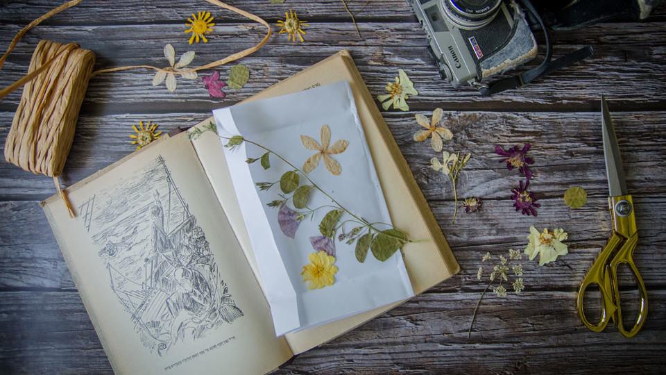פרחים מיובשים (צילום: נועה קליין)