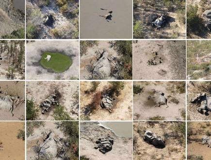 חוקרים: נפתרה תעלומת מותם של 350 הפילים