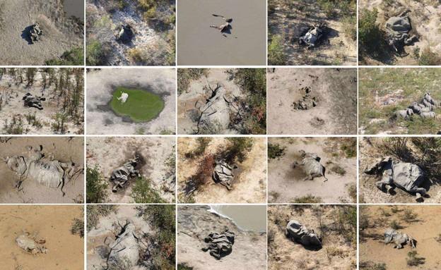 אסון הפילים  (צילום: Handout)