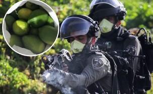 """כוחות מג""""ב (צילום: נאסר איסתייה, פלאש 90)"""