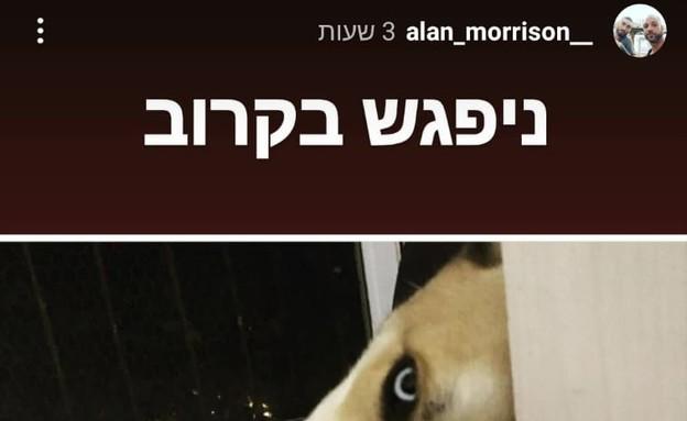 הכלב שעבר התעללות (צילום: צילום מסך מתוך האינסטגרם של אלן מוריסון)