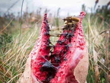 איברי גוף ומפלצות: אלה הפטריות המפחידות בעולם