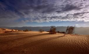 פלאנט ערבה (צילום: ארי בלטינסטר)