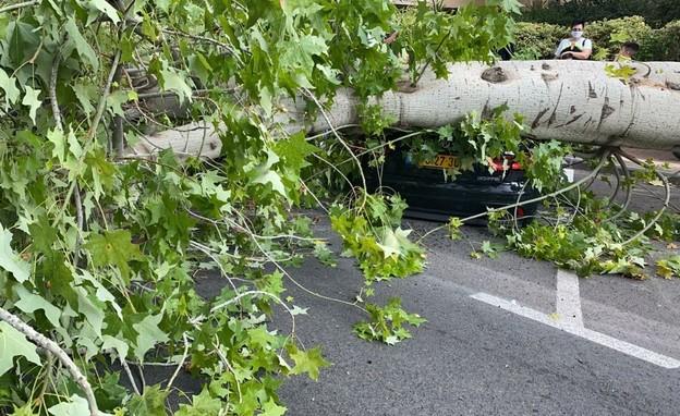 """עץ קרס על רכבים ברחוב סלנט בפ""""ת (צילום: איחוד הצלה)"""