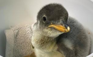 פינגווין (צילום: מתוך עמוד האינסטגרם sealifesydneyaquarium@)