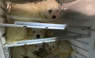 גורים במקרר (צילום: טוויטר, twitter)
