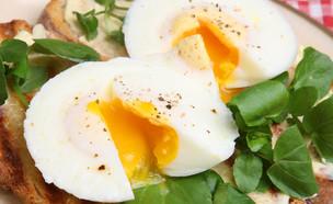 ביצים עלומות (צילום: Joe Gough, Shutterstock)