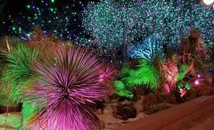 הגן הבוטני בירושלים (צילום: סוניה פרנזל)