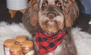 בירה לכלבים (צילום: צילום מסך מעמוד האינסטגרם של Harley Ford-Hoffert)