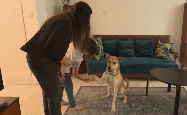 החיים החדשים של הכלב סטאר (צילום: N12)