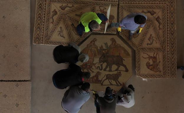 הפסיפס המפורסם חוזר ללוד (צילום: אמיל אלג'ם, רשות העתיקות)