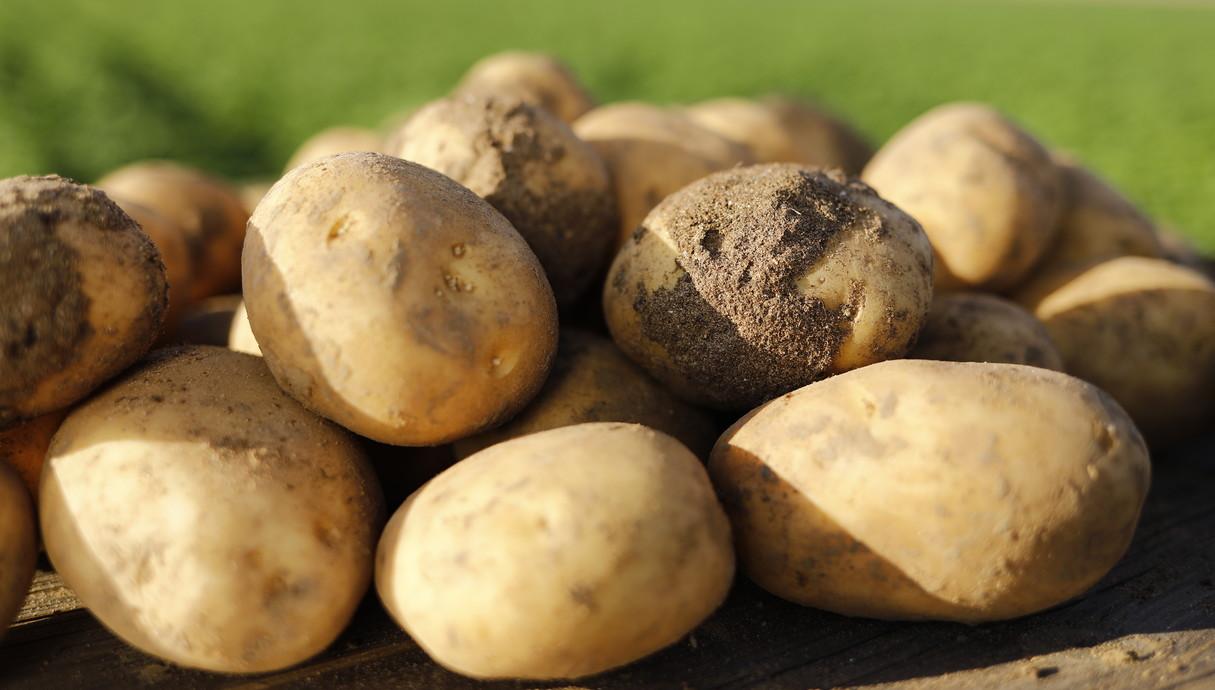 סוגי תפוחי אדמה