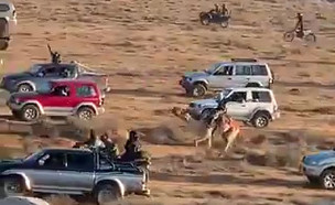 תיעוד: מרוצי גמלים המוניים בדרום (צילום: עימאד אלקורעאן, mako חופש)