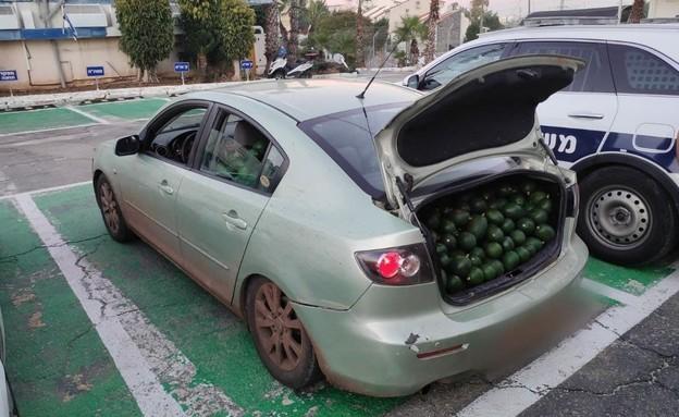 """מאות ק""""ג של אבוקדו שנתפסו ברכבו של חשוד בגניבה (צילום: דוברות המשטרה)"""