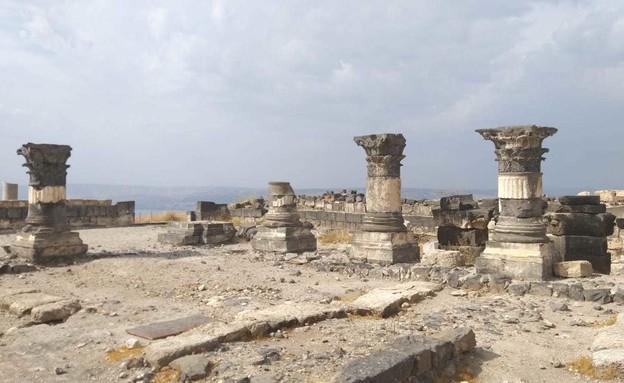 סוסיתא (צילום: שלומית שביט)