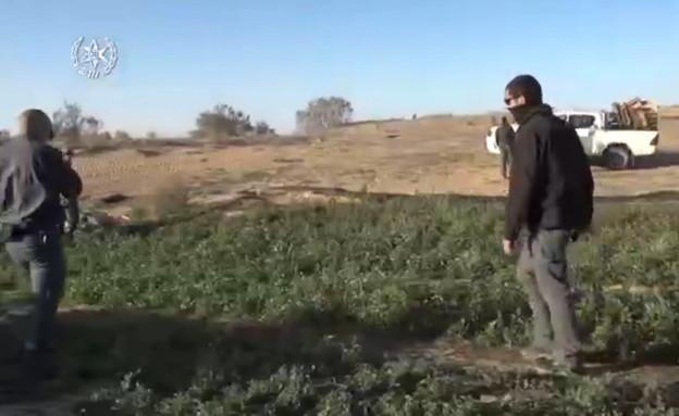 השמדת מתחמים לגידול מריחואנה (צילום: דוברות המשטרה)