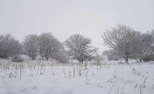 שמורת החרמון (צילום: דפנה בן נון, רשות הטבע והגנים)