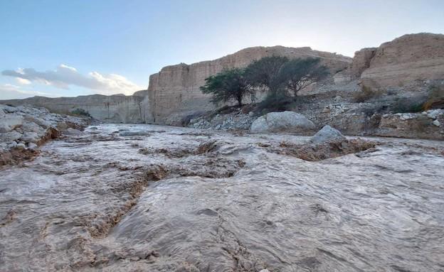 נחל צאלים (צילום: מתן בוגומולסקי, רשות הטבע והגנים)