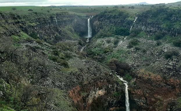 שמורת גמלא (צילום: אבירם שני, רשות הטבע והגנים)