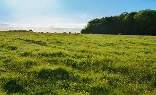 שדה פתוח (צילום: Tim M, shutterstock)