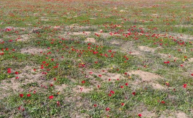 דרום אדום (צילום: אילן ארנון)