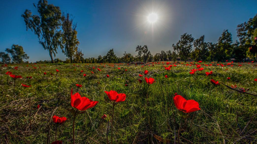 דרום אדום (צילום: ידין גלעדי)