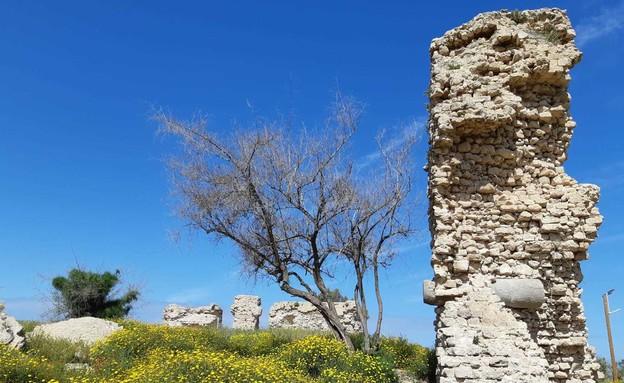 תל אשקלון (צילום: אדר סטולרו מליחי, רשות הטבע והגנים)