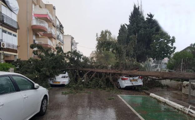 עץ נפל בבת ים (צילום: מקור אמין )
