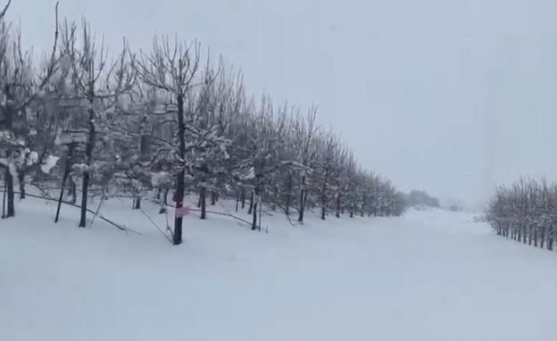 שלג בקיבוץ אורטל (צילום: אופיר בלאו)