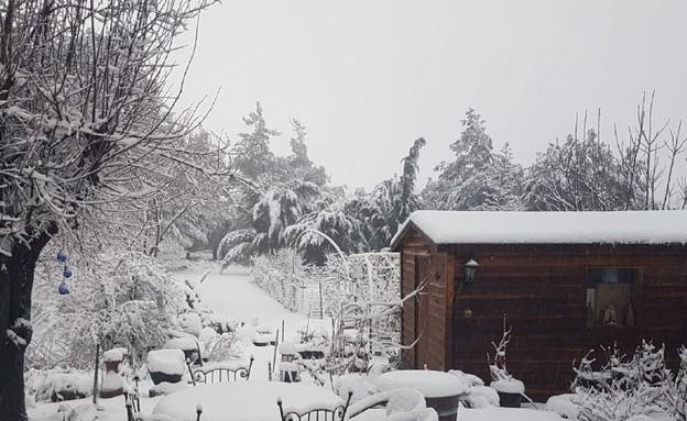 שלג בקיבוץ אלרום (צילום:  יוספה ראובני)