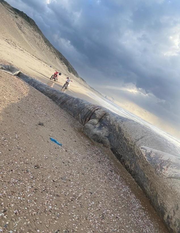 לוויתן בחוף ניצנים (צילום: צילום: דיווחים בזמן אמת)