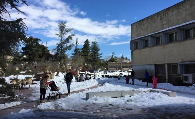 שלג באיזור רמת הגולן (צילום: ללא)