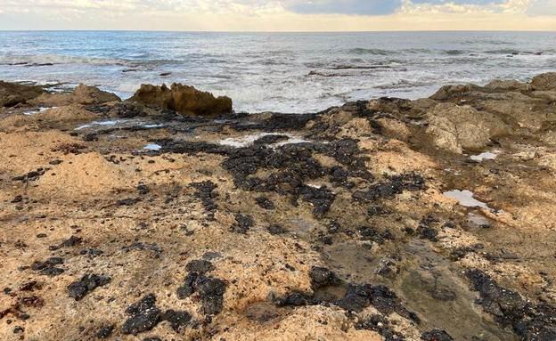 הזיהום הגיע לשמורת ראש הנקרה (צילום: יגאל בן ארי, רשות הטבע והגנים)