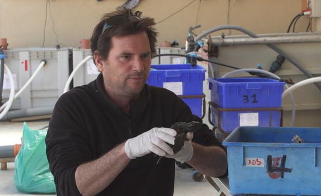 """ד""""ר יניב לוי, המרכז הארצי להגנת צבי ים (צילום: החדשות 12)"""