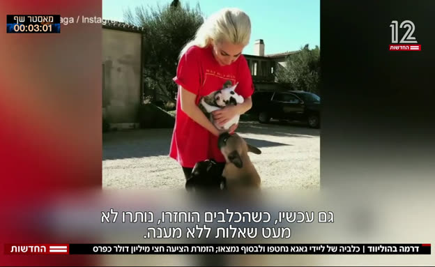 דרמה בהוליווד: כלביה של ליידי גאגא נחטפו