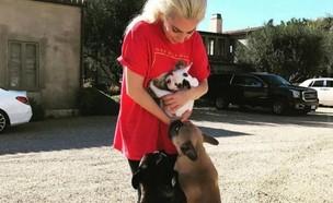 ליידי גאגא והכלבים