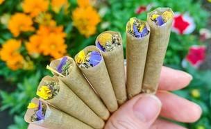 עמוד אינסטגרם קנאביס (צילום:  Miss Marijuana, instagram)