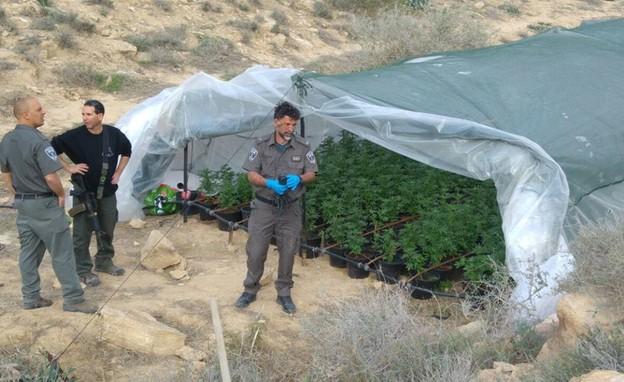המשטרה תופסת חממת גידול בנגב (צילום: דוברות משטרת ישראל)