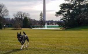 כלב של הנשיא ביידן (צילום: CNN)