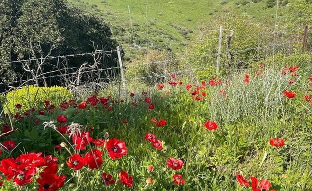 נחל מיצר (צילום: ארז דגן)