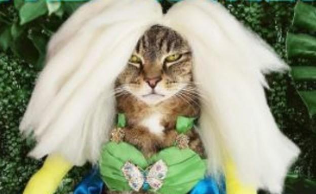 החתולה ליילה (צילום: מתןך עמוד האינסטגרם rupaws_drag_race@, instagram)