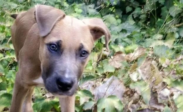 גור כלבים (צילום: עמית סלונים)