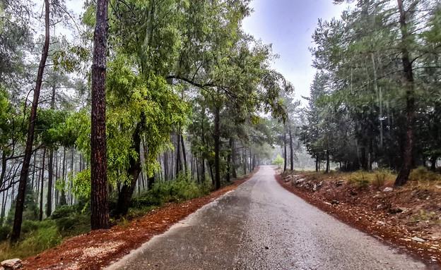 """יער הזורע (צילום: אניל זאהר, קק""""ל)"""