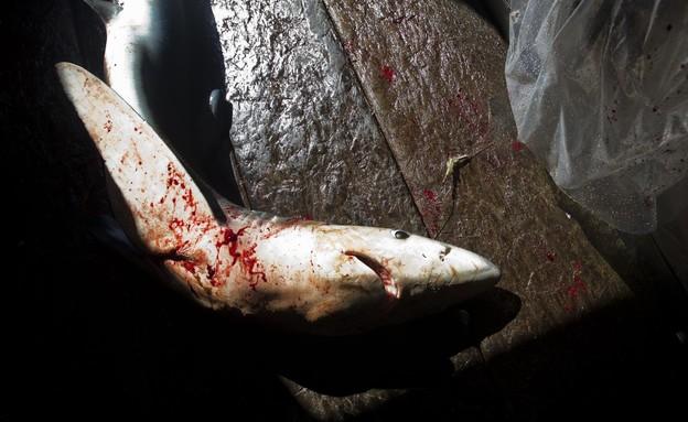 דיג בלתי חוקי (צילום: Paul Hilton, גרינפיס)