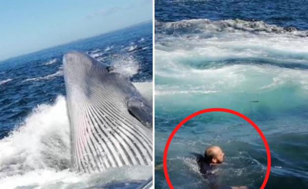 לווייתן בריד (צילום: Dogtooth Media, יוטיוב)