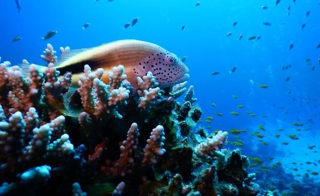 אלמוגים במפרץ אילת (צילום: מעוז פיין, אוניברסיטת בר אילן)
