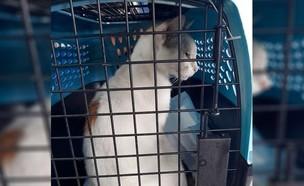חתול (צילום: nypost.com, twitter)