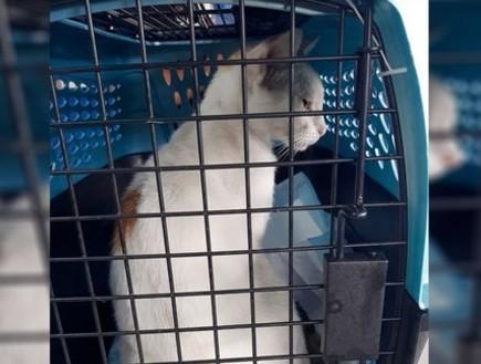 פנמה: כך הפך חתול רחוב למבריח סמים לאסירים