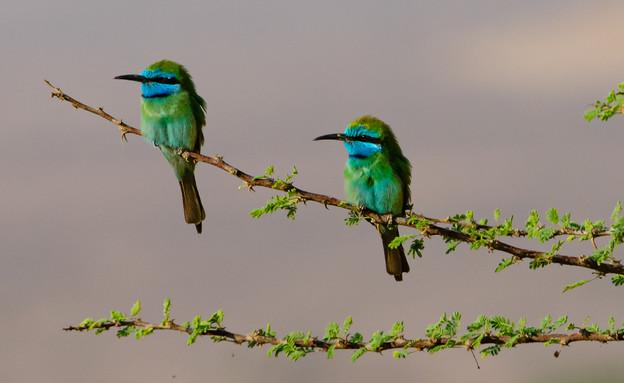 מקום ראשון ציפורים (צילום: אודי צורי)