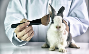 ניסויים בבעלי חיים (צילום: ARTFULLY PHOTOGRAPHER, shutterstock)